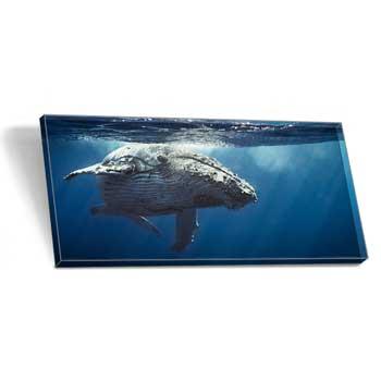 foto hinter acrylglas 40 x 80 cm f r eur. Black Bedroom Furniture Sets. Home Design Ideas