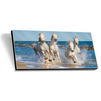 GalleryPrint High-Gloss auf Alu-Dibond 50 x 100 cm