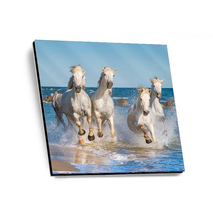GalleryPrint High-Gloss auf Alu-Dibond 40 x 40 cm