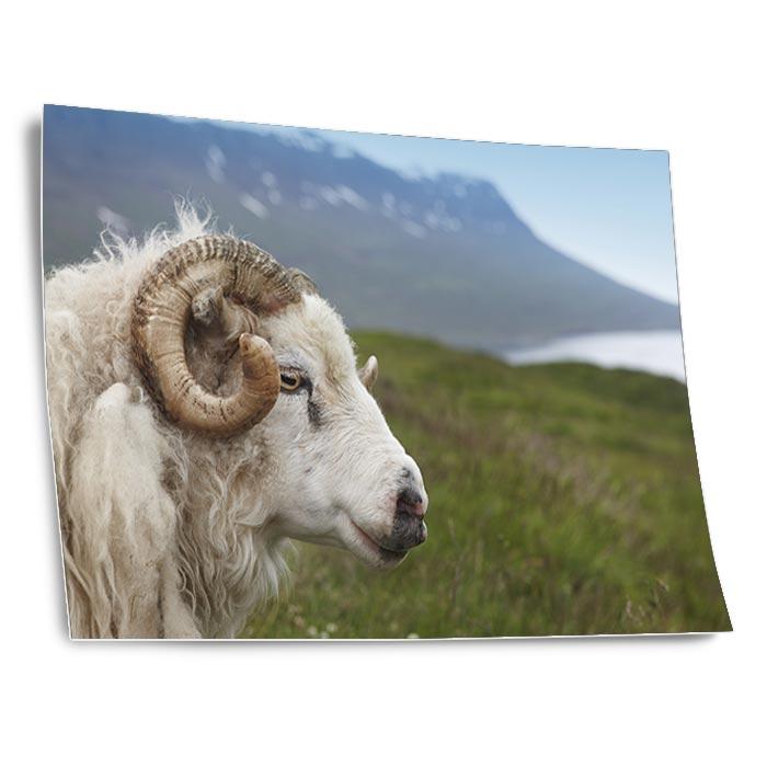 Fotodruck auf Fineart Baryt: 18 x 24 cm für 6.60 EUR